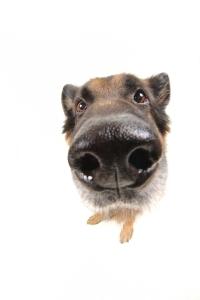 up close nose