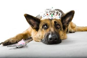 alpha bitch tiara