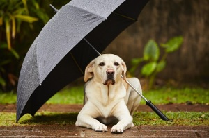 dog outside umbrella small